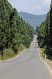 Cyprysowy pas ruchu w Bolgheri, Tuscany, Włochy Fotografia Stock
