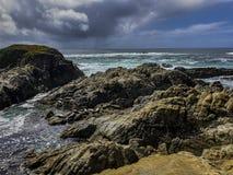 Cyprysowy punktu rezerwat dzikiej przyrody dla morskiego życia zdjęcie royalty free