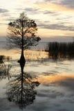 cyprysowy spadek odbijający wschód słońca drzewo fotografia royalty free