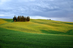Cyprysses in Tuscany. Photo shows clump of cyprysses on fields of grass in Tuscany. Overcast, little dark and romantic clouds, grass softly illuminated by the Stock Image