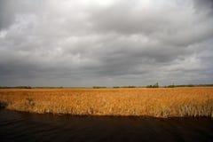 cyprysu duży krajobraz Obrazy Stock