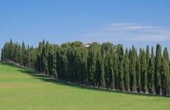 Cyprysu krajobraz w Tuscany, Włochy Obraz Royalty Free