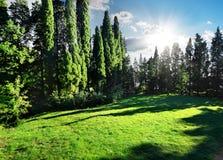 Cyprysu park Fotografia Royalty Free
