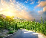 Cyprysu park w górach Obrazy Royalty Free