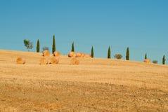 Cyprysy drogowi w tuscanian wzgórzach Włochy Obrazy Royalty Free