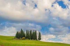 Cyprysy na wzgórzu w letnim dniu Fotografia Stock
