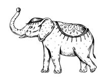 Cyrkowa słonia rytownictwa wektoru ilustracja Obraz Royalty Free