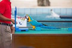 Cyrkowi przedstawienia papugi bawić się piłki zdjęcia stock