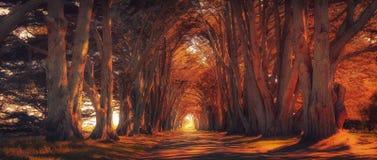 Cyrpus tree tunnel at Sunset royalty free stock photo