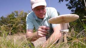 Cystolepiotapaddestoel in het gras stock videobeelden