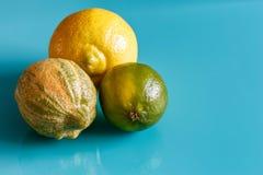 Cytrus owoc na cian tle Zdjęcie Royalty Free