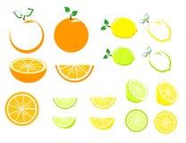 Cytrus owoc set Zdjęcia Stock