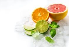 Cytrus owoc z mennicą i sześcianami lód na biel kopii interliniują bac Fotografia Stock