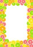 Cytrus rama, granica z przestrzenią dla teksta lub fotografia, Lato druk komponujący żółta cytryna, zielony wapno, różowy grapefr Obraz Stock