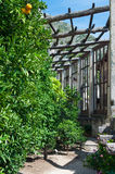 Cytryn drzewa od starego Limonaia który zawiera wiele stare rośliny, Zdjęcie Stock