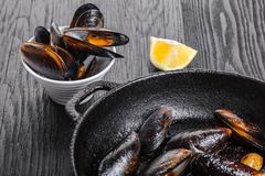 cytryn gotujący mussels zdjęcia royalty free
