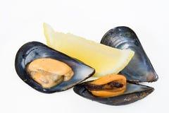 cytryn mussels dwa obraz royalty free