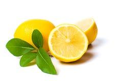 Cytryna i nowi liście odizolowywający Zdjęcia Stock