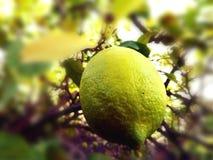 Cytryna - kolor żółty Zdjęcie Stock