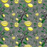 Cytryna piękny bezszwowy wzór Zdjęcie Royalty Free
