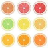 Cytryna, pomarańcze, grapefruitowy, i wapno Zdjęcia Royalty Free