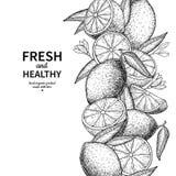 Cytryna rabatowy wektorowy rysunek Cytrus owoc grawerujący ramowy templat Obraz Stock