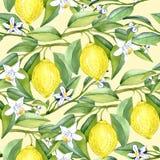Cytryna rozgałęzia się z owoc i białymi kwiatami na miękkim żółtym tle royalty ilustracja