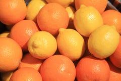 Cytryna sezonowy owocowy uprawia ziemię Emilia Romagna Włochy zdjęcia royalty free
