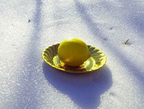 Cytryna w śniegu Fotografia Stock