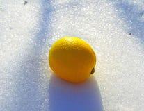 Cytryna w śniegu Obraz Stock
