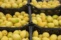 cytryny świeży kolor żółty Obraz Stock