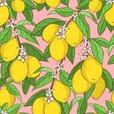 cytryny deseniują bezszwowego ilustracja wektor