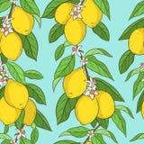 cytryny deseniują bezszwowego Zdjęcia Royalty Free
