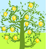 cytryny drzewo Obraz Royalty Free