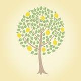 cytryny drzewo Fotografia Royalty Free
