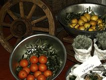 Cytryny pomarańczowe, domowy, hodowla, eco, produkty, eksponujący, jarmark zdjęcia royalty free