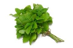 cytryny szereg zielarskie balsam Zdjęcia Royalty Free