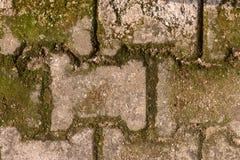 Cytryny trawa na starych ściennych cegłach w Świątynnym Chiang Mai Thailan zdjęcia stock