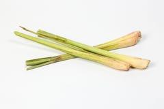 Cytryny trawy fragrant ziele Zdjęcie Stock