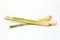 Cytryny trawy fragrant ziele Obraz Stock