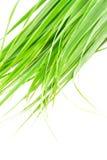 Cytryny trawy liść Fotografia Stock