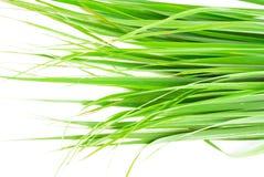 Cytryny trawy liść Obrazy Royalty Free