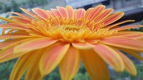 cyzelatorstwa słońce Zdjęcie Royalty Free