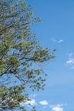Część drzewo z niebieskim niebem Zdjęcia Royalty Free