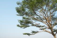 Część drzewo z niebieskim niebem Fotografia Stock