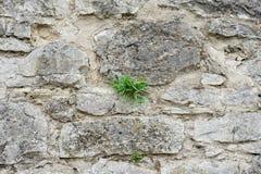 Część kamienna ściana dla tła lub tekstury Obraz Stock