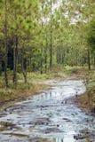 Część lasowy sposób Fotografia Royalty Free