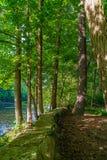 Część Neversink rzeka blisko Guymard Turnpike, dopływ Delaware Rzeczny Unikalny teren w Catskills, NY obraz stock