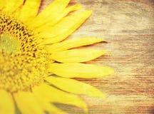 Część słonecznik Makro- Natura Drewniany tło Selekcyjna ostrość Obraz Stock