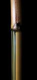 Część tajlandzki żółty bambusowy las na czerni Fotografia Stock